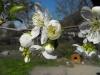 Tavasz 2.